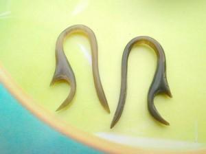 flesh plugs organic earrings. organic horn talon tapers.
