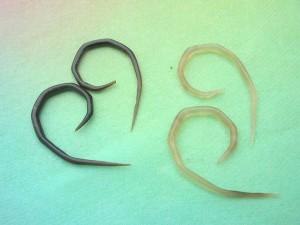 organic jewelry horn taper